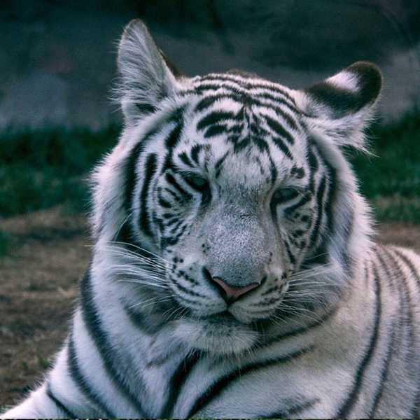 Erramatti dibbalu-Indra gandhi zoo