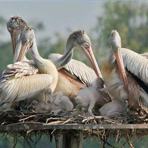 ketavaram_Rollapadu wild life